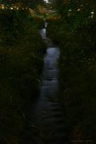 山口市 蛍舞う一の坂川